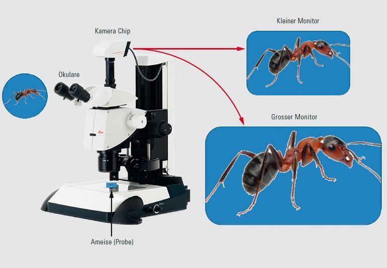 Ist eine fache vergrößerung bei der digitalmikroskopie