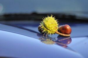 chestnuts_in_the_autumn_on_the_blue_hood;_Kastanien_im_Herbst_auf_einer_blauen_Motorhaube